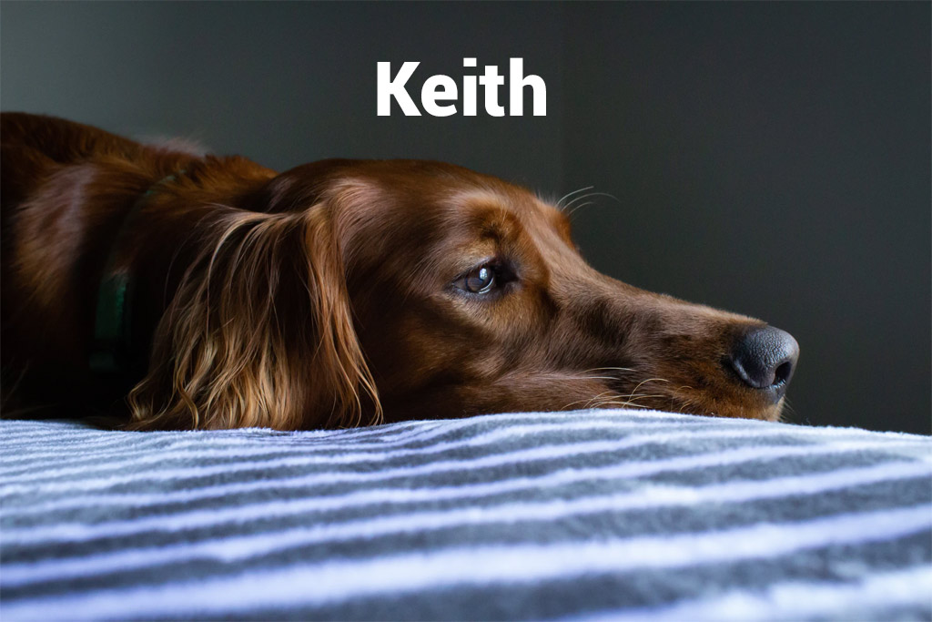 Morose dog named Keith